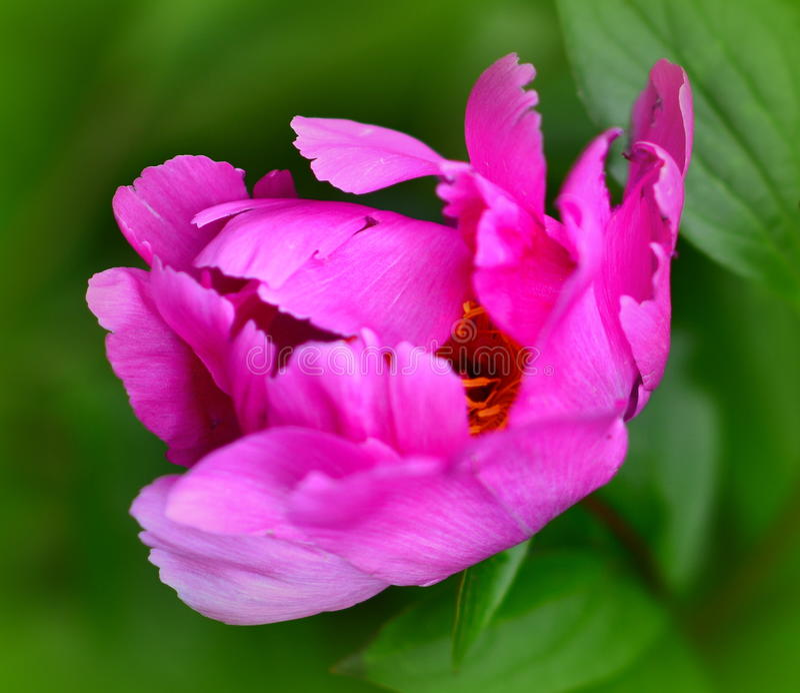 όμορφο λουλούδι στοκ φωτογραφίες με δικαίωμα ελεύθερης χρήσης