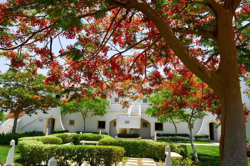 Όμορφο πάρκο με τα τροπικά όμορφα φυσικά εξωτικά φυτά, δέντρα με τα κόκκινα λουλούδια delonix και φοίνικες με τα πράσινα φύλλα, w στοκ εικόνες