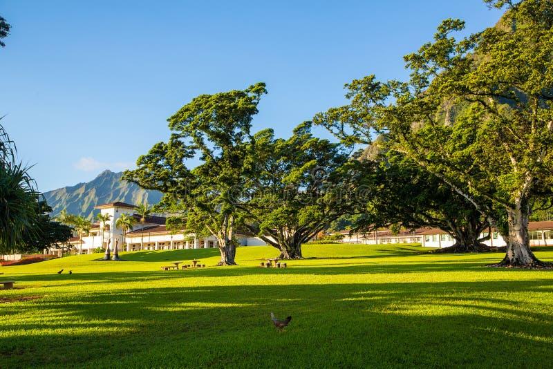 Όμορφο πάρκο με το πανεπιστήμιο της Χαβάης στοκ φωτογραφίες