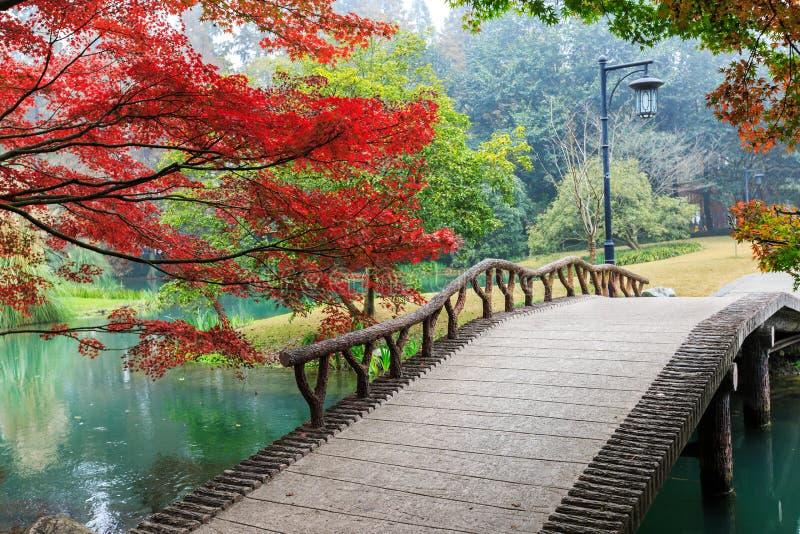 Όμορφο πάρκο το φθινόπωρο στοκ φωτογραφίες