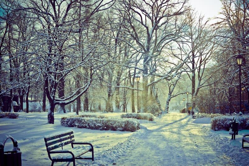 Όμορφο πάρκο το χειμώνα στοκ εικόνες