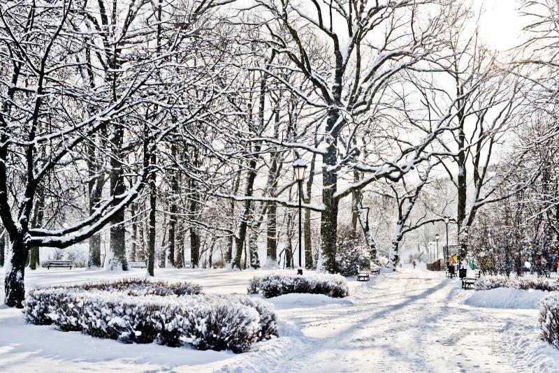 Όμορφο πάρκο το χειμώνα στοκ εικόνα με δικαίωμα ελεύθερης χρήσης