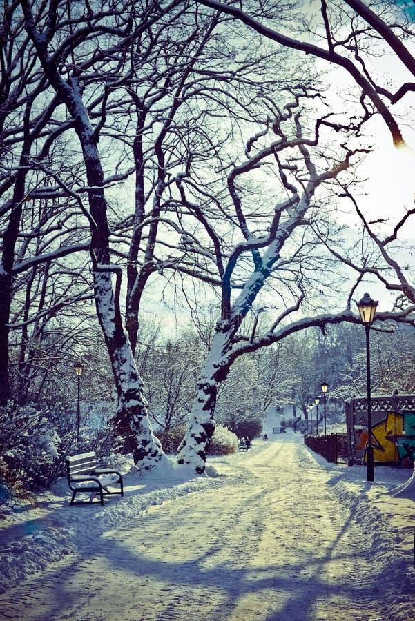 Όμορφο πάρκο το χειμώνα στοκ εικόνες με δικαίωμα ελεύθερης χρήσης
