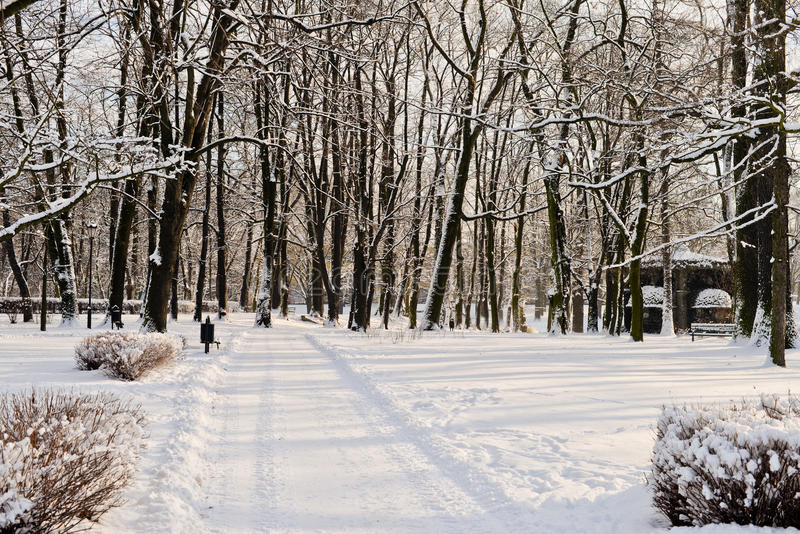 Όμορφο πάρκο το χειμώνα στοκ εικόνα