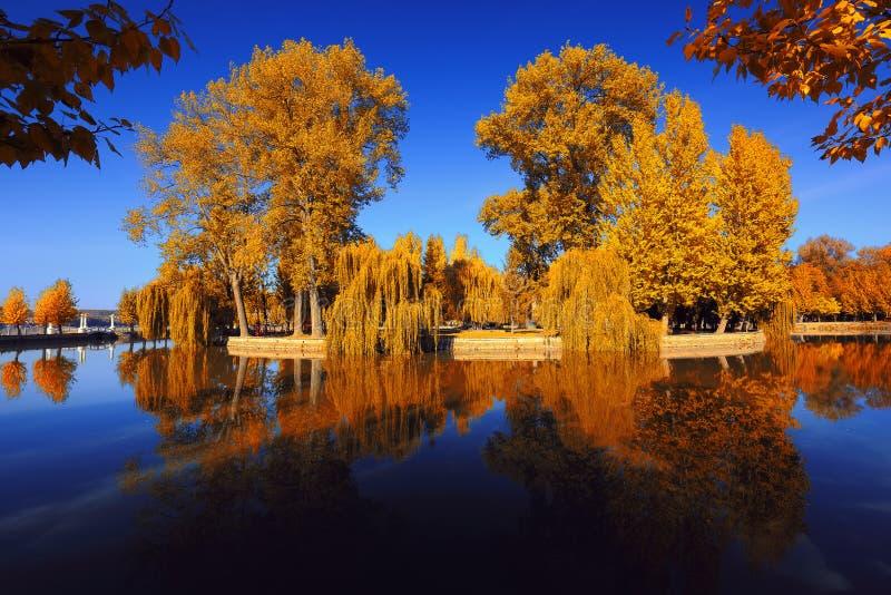 Όμορφο πάρκο φθινοπώρου στον ηλιόλουστο καιρό στοκ εικόνες