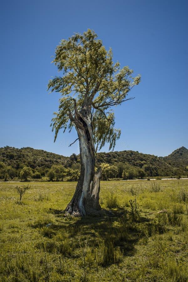 Όμορφο παλαιό δέντρο με το υπόβαθρο βουνών στοκ εικόνες