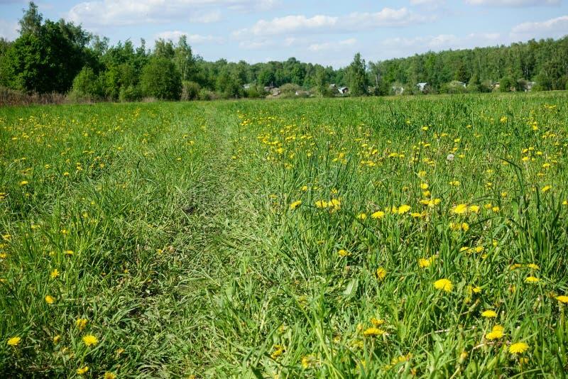 Όμορφο ποιμενικό τοπίο Τομέας με τα κίτρινα λουλούδια και την πράσινη χλόη στοκ εικόνες