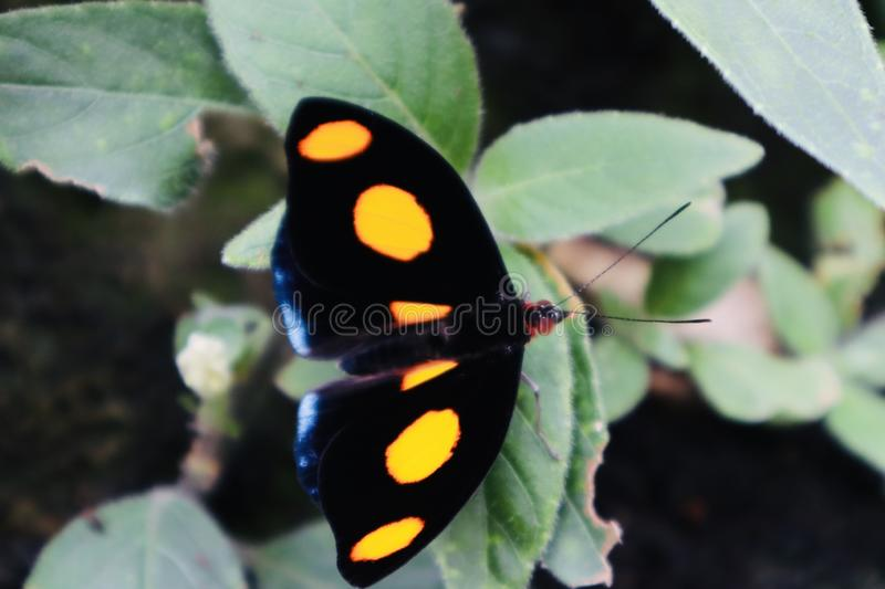 Όμορφο πορτοκαλί μπλε μαύρο τροπικό λουλούδι πεταλούδων με ανθίζοντας άγριο λουλούδι λουλουδιών υποβάθρου το στενό επάνω στοκ εικόνα
