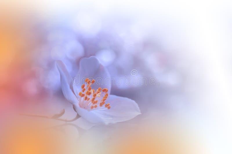 Όμορφο πορτοκαλί υπόβαθρο φύσης Αφηρημένη καλλιτεχνική ταπετσαρία Μακρο φωτογραφία τέχνης r Floral σχέδιο r στοκ φωτογραφίες με δικαίωμα ελεύθερης χρήσης