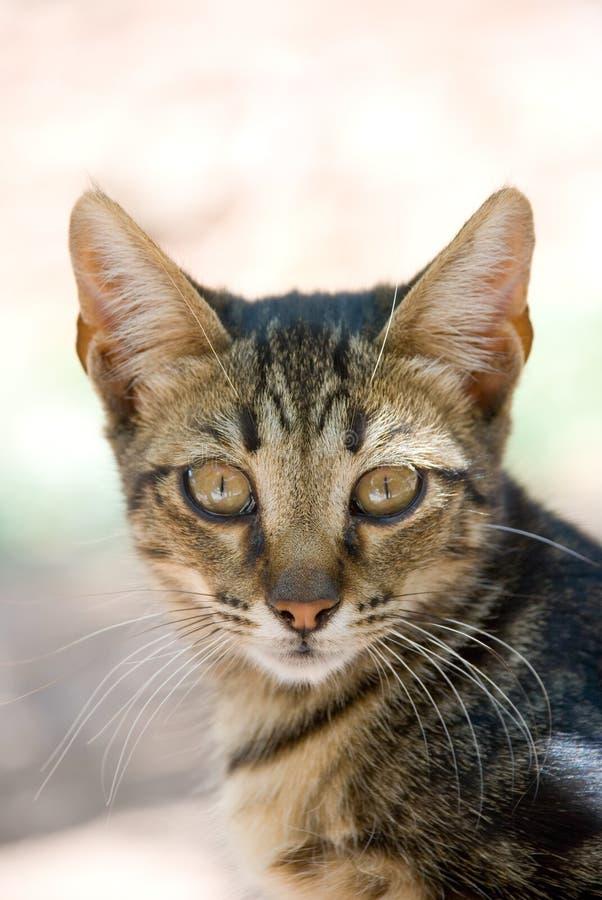 όμορφο πορτρέτο γατακιών στοκ φωτογραφίες με δικαίωμα ελεύθερης χρήσης