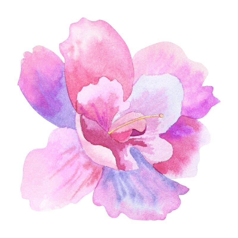 Όμορφο πορφυρό ρόδινο λουλούδι E o διανυσματική απεικόνιση