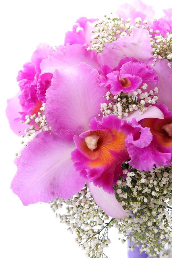 Όμορφο πορφυρό orchid στοκ εικόνα με δικαίωμα ελεύθερης χρήσης