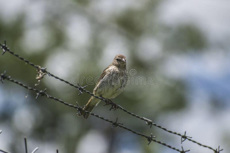 Όμορφο πουλί που στέκεται σε μια καλωδίωση με το υπόβαθρο θαμπάδων στοκ εικόνες