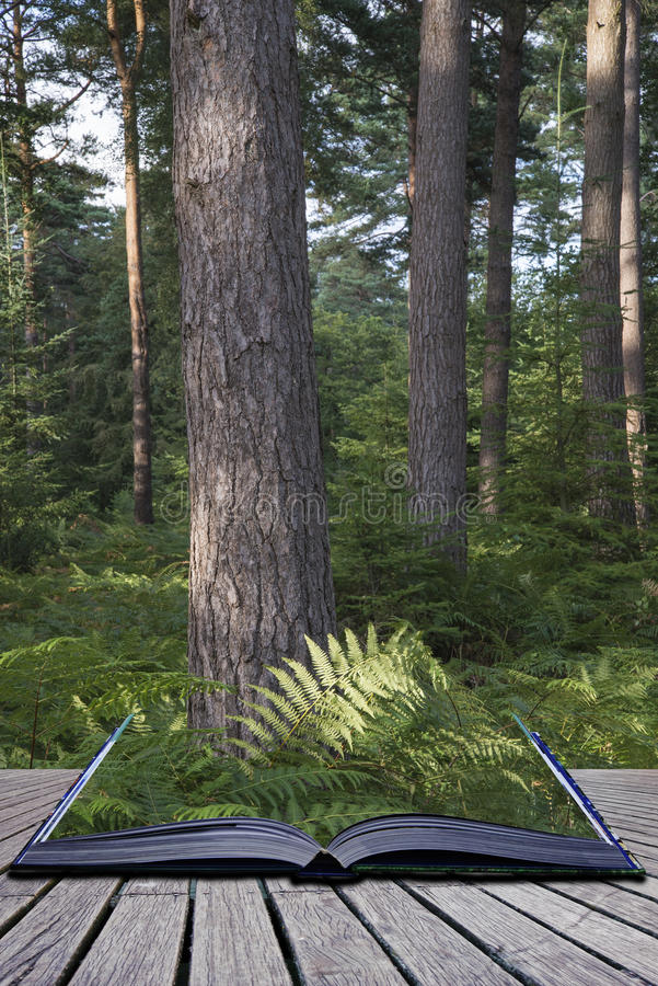 Όμορφο πολύβλαστο δονούμενο δασικό τοπίο στο θερινό εννοιολογικό boo στοκ εικόνες