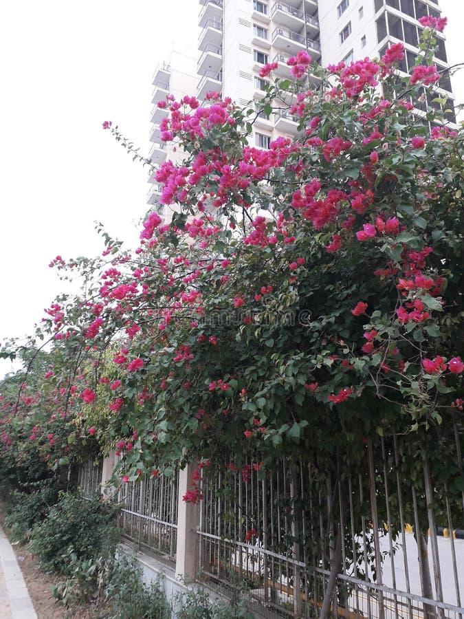 Όμορφο πράσινο δέντρο και ροζ στοκ εικόνα