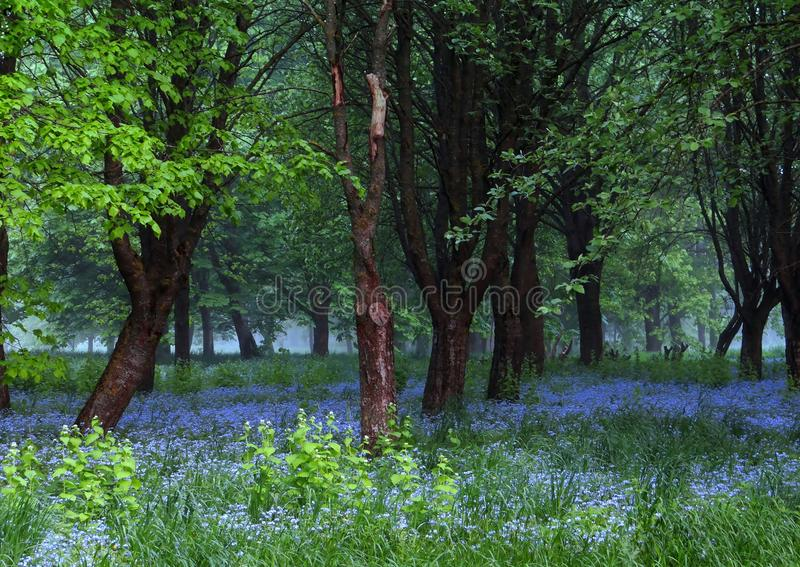 Όμορφο πρωί άνοιξη, μπλε λουλούδια, καταπληκτικό φως στοκ εικόνες με δικαίωμα ελεύθερης χρήσης