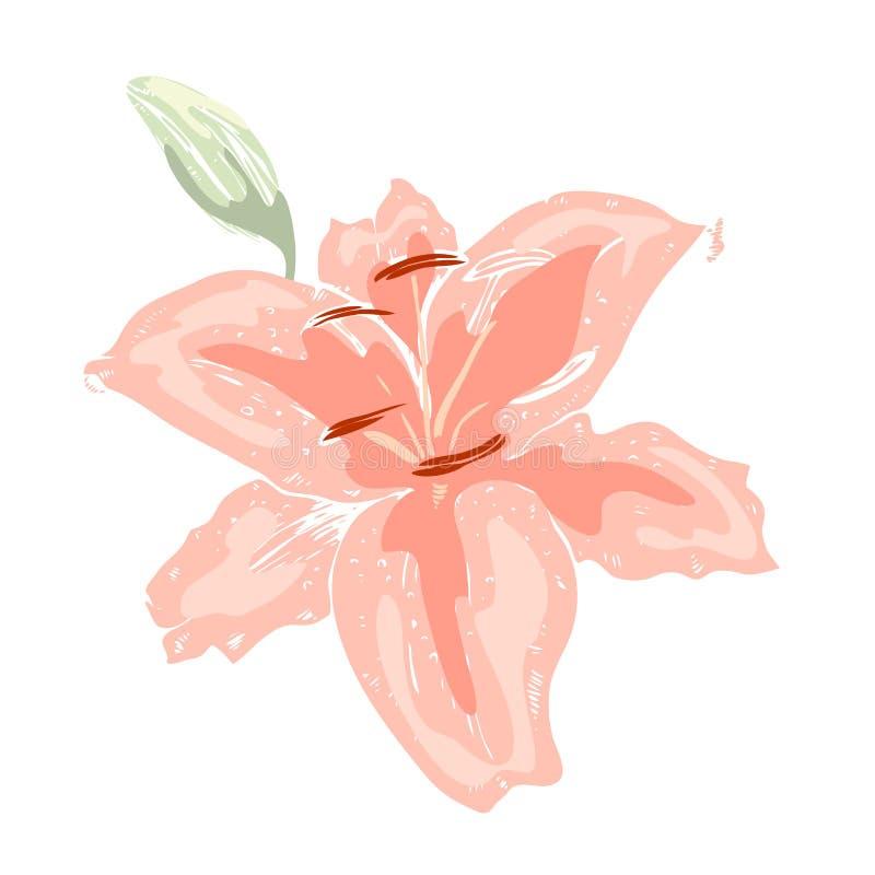 όμορφο ροζ κρίνων λουλο&up Απεικόνιση του μεγάλου κρίνου που απομονώνεται στο άσπρο υπόβαθρο συρμένο διάνυσμα χεριών Floral συλλο απεικόνιση αποθεμάτων