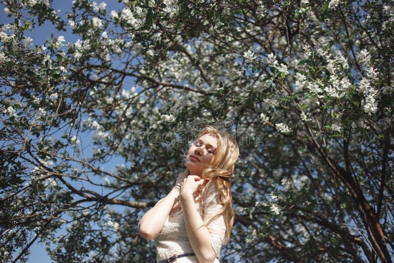 Όμορφο ρομαντικό κορίτσι άνοιξη, ξανθός, που στέκεται σε έναν ανθίζοντας οπωρώνα της Apple Αισθησιακό pleasuring ανθίζοντας ελατή στοκ εικόνα