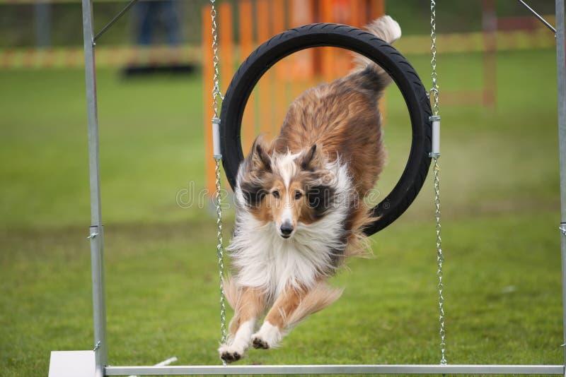 Όμορφο σκυλί στην κίνηση στοκ εικόνα με δικαίωμα ελεύθερης χρήσης