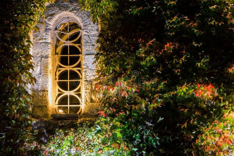 Όμορφο σχηματισμένο αψίδα παράθυρο και άγρια σταφύλια τη νύχτα με στοκ εικόνες