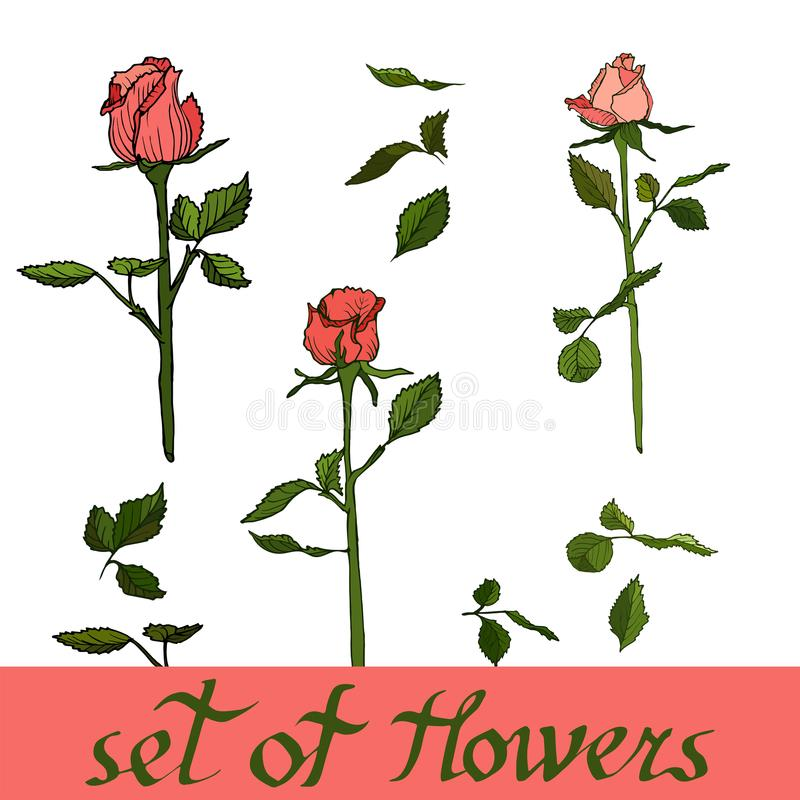 Όμορφο σύνολο λουλουδιών, διάνυσμα από τα τριαντάφυλλα Floral διανυσματική απεικόνιση στοκ εικόνες