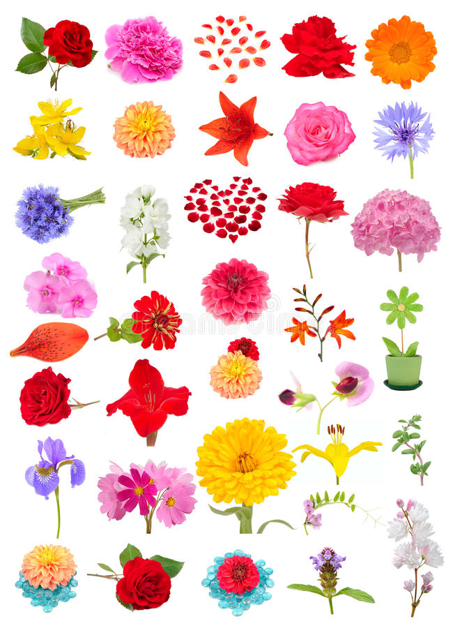 Όμορφο σύνολο λουλουδιών που απομονώνεται στο άσπρο υπόβαθρο στοκ φωτογραφία