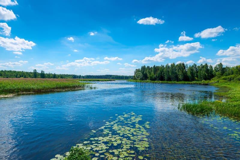 Όμορφο τοπίο - ένας ποταμός με το σαφές νερό, ένα πράσινο δασικό α στοκ φωτογραφίες με δικαίωμα ελεύθερης χρήσης