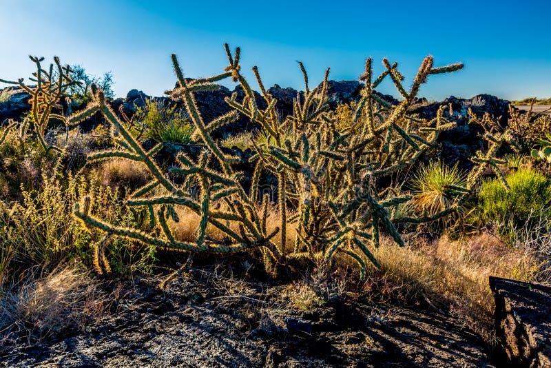 Όμορφο τοπίο ερήμων στον ποταμό της περιοχής πυρκαγιάς στο Νέο Μεξικό στοκ φωτογραφία με δικαίωμα ελεύθερης χρήσης
