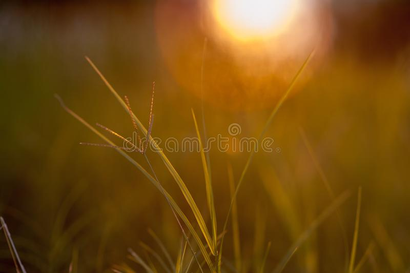 Όμορφο τοπίο ηλιοβασιλέματος γεωργίας Τα αυτιά του χρυσού σίτου κλείνουν επάνω Αγροτική σκηνή κάτω από το φως του ήλιου Θερινό υπ στοκ εικόνες με δικαίωμα ελεύθερης χρήσης