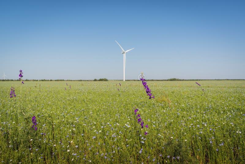 Όμορφο τοπίο με τους στροβίλους γεννητριών αέρα στον πράσινους τομέα και το μπλε ουρανό ανανεώσιμο δέντρο πράσινου φωτός ενεργεια στοκ φωτογραφία