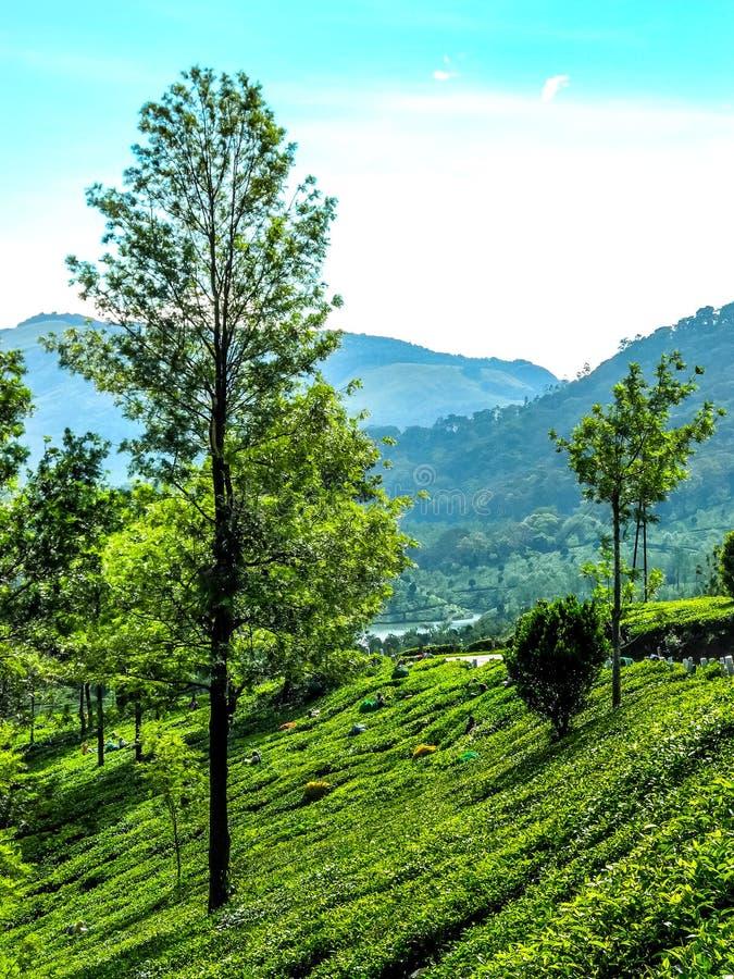 Όμορφο τοπίο με το άγριους δάσος και τον ποταμό Periyar, Κεράλα, Ινδία στοκ εικόνες με δικαίωμα ελεύθερης χρήσης