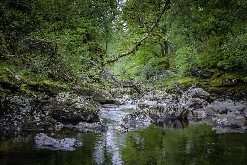 Όμορφο τοπίο της Σκωτίας, UK Ρεύμα με τους βράχους και πεσμένο δέντρο στο δάσος στοκ φωτογραφίες