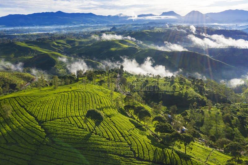 Όμορφο τοπίο της φυτείας τσαγιού στο πρωί στοκ εικόνα