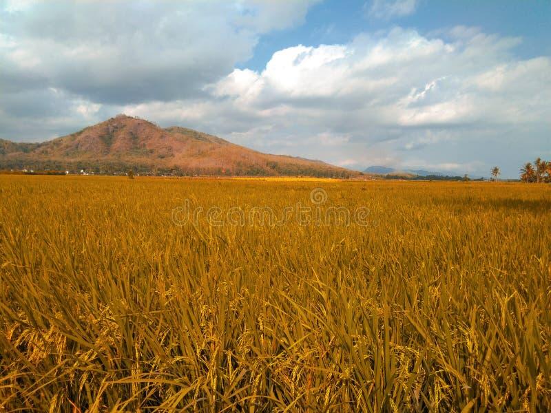 Όμορφο τοπίο τομέων ρυζιού με το βουνό και το μπλε ουρανό στοκ φωτογραφία