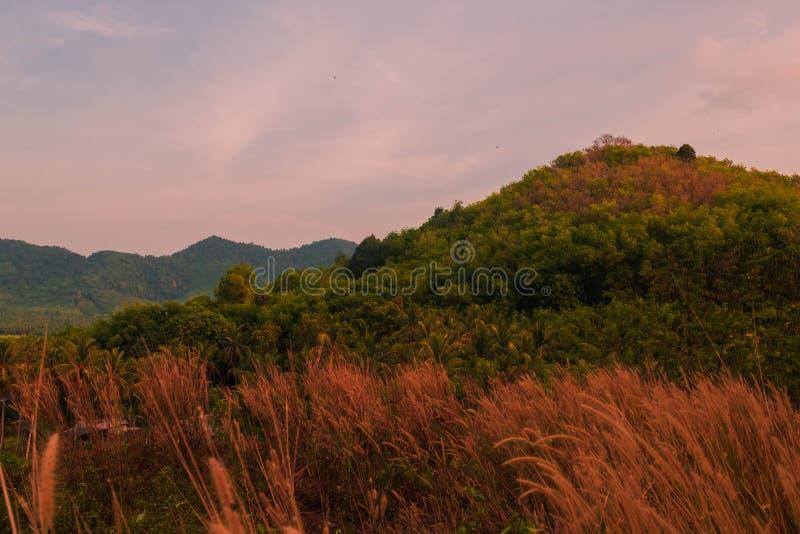όμορφο τοπίο του βουνού το απόγευμα υπάρχει κομμουνιστικός τομέας χλόης είναι πρώτο πλάνο, Koh yai yao, Phang Nga, Ταϊλάνδη στοκ φωτογραφία με δικαίωμα ελεύθερης χρήσης