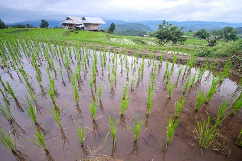 όμορφο τοπίο του τομέα ρυζιού ορυζώνα στοκ φωτογραφία με δικαίωμα ελεύθερης χρήσης