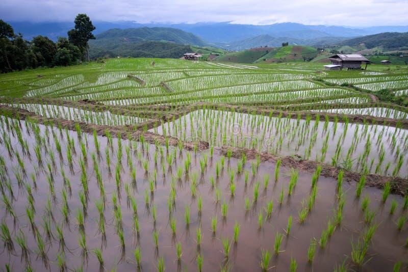 όμορφο τοπίο του τομέα ρυζιού ορυζώνα στοκ εικόνες