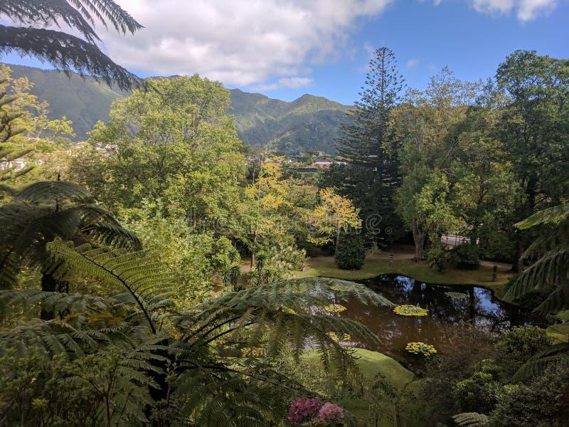 Όμορφο τοπίο των Αζορών πάρκων γιατροσόφι Terra στοκ φωτογραφίες