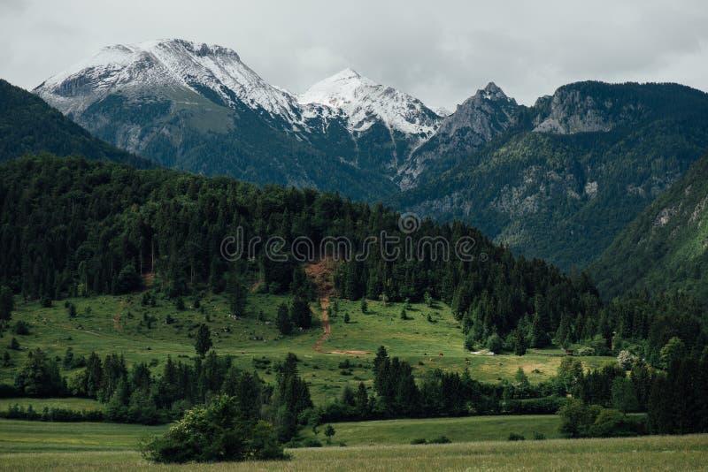 Όμορφο τοπίο των ιουλιανών Άλπεων, Σλοβενία, Ευρώπη στοκ φωτογραφία