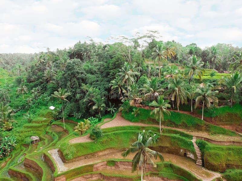 Όμορφο τοπίο των τομέων ρυζιού στο Μπαλί στοκ εικόνες με δικαίωμα ελεύθερης χρήσης