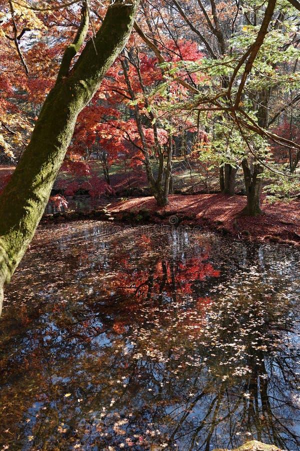 Όμορφο τοπίο φθινοπώρου με την αντανάκλαση στο νερό σε Kumob στοκ εικόνα με δικαίωμα ελεύθερης χρήσης