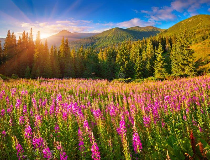 Όμορφο τοπίο φθινοπώρου στα βουνά με τα ρόδινα λουλούδια στοκ φωτογραφίες