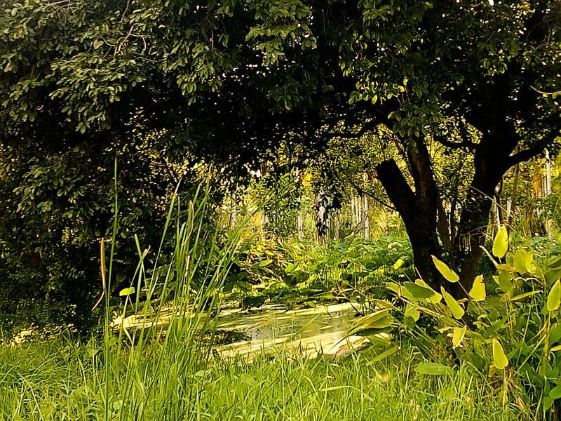 Όμορφο τροπικό πράσινο τοπίο ζουγκλών της πράσινης τροπικής λίμνης στους προορισμούς φύσης και ταξιδιού τροπικών δασών στην κρυμμ στοκ φωτογραφία