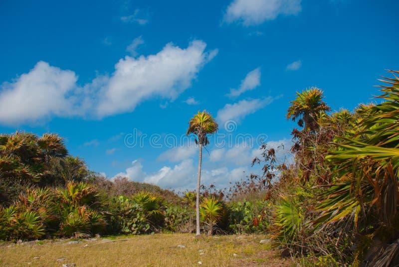 Όμορφο τροπικό τοπίο με τους κάκτους και τους φοίνικες Tulum, Μεξικό, Yucatan, Riviera Maya στοκ εικόνες
