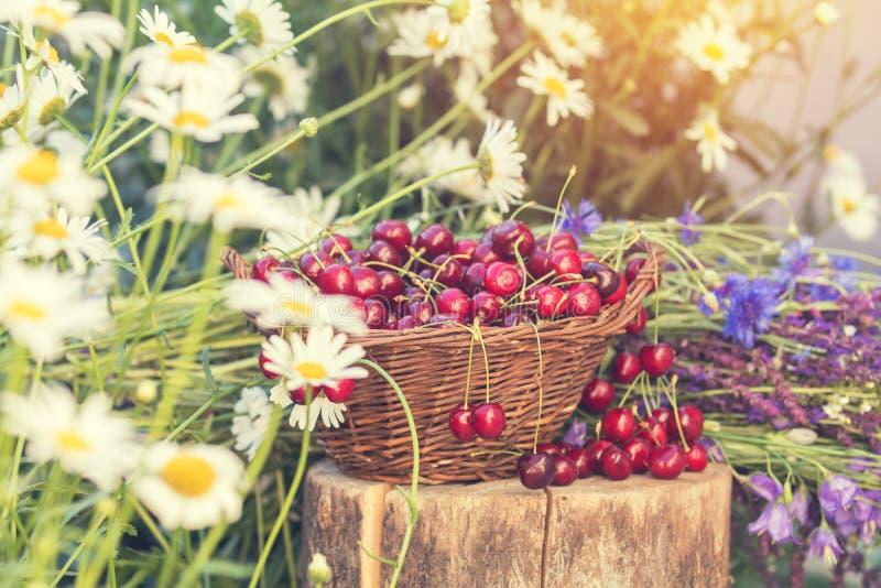 Όμορφο υπόβαθρο άνοιξη με τα κεράσια και τα λουλούδια Φως του ήλιου, στοκ φωτογραφίες