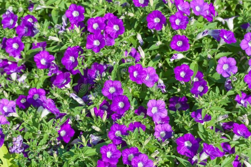 Όμορφο υπόβαθρο με τα ζωηρόχρωμα λουλούδια κήπων στοκ φωτογραφία