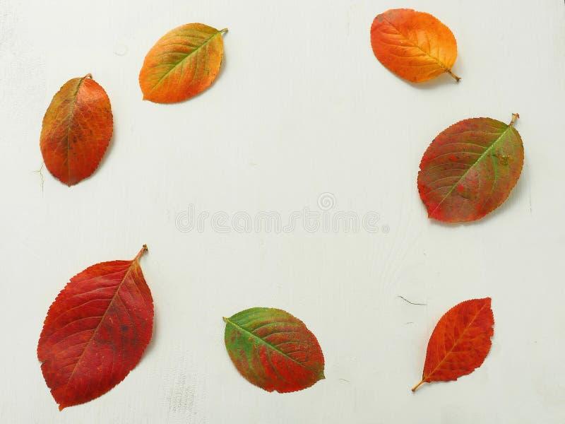 Όμορφο υπόβαθρο με τα φύλλα φθινοπώρου και τα ώριμα μήλα στοκ εικόνα