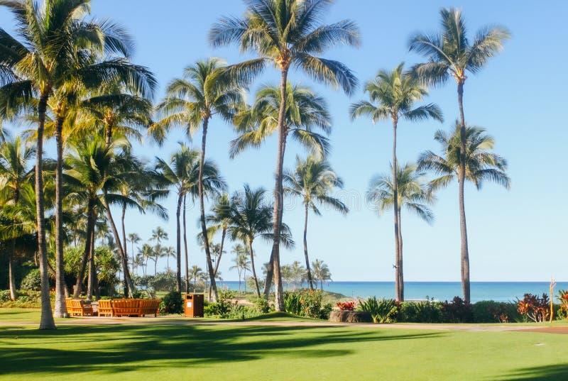 Όμορφο υπόβαθρο της Χαβάης στοκ εικόνες
