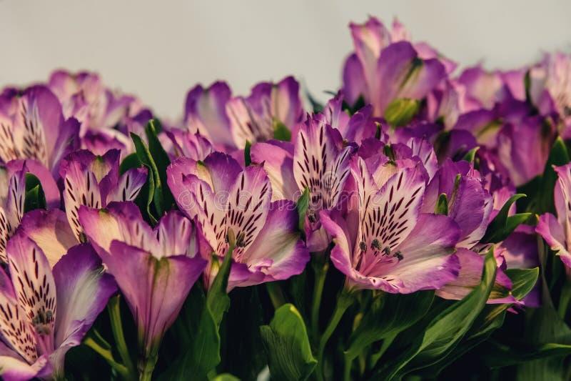 Όμορφο υπόβαθρο των κόκκινων και ρόδινων λουλουδιών Alstroemeria στο ξύλινο υπόβαθρο Βαμμένο γυαλί διάστημα αντιγράφων στοκ εικόνα