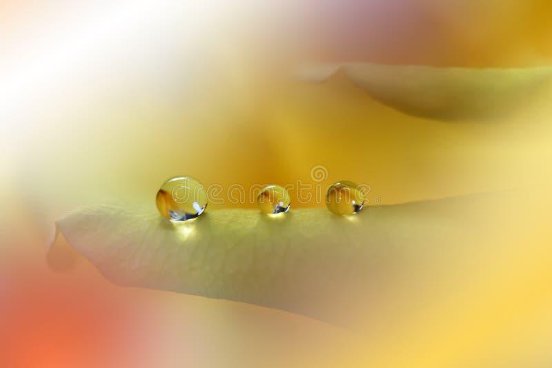 Όμορφο υπόβαθρο φύσης Αφηρημένη καλλιτεχνική ταπετσαρία Μακρο φωτογραφία τέχνης E Yellow Rose Καλοκαίρι, ήλιος Πτώσεις διανυσματική απεικόνιση